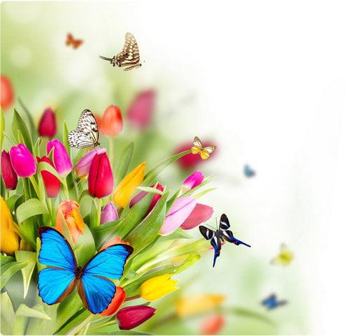 fjärilsbild-resize